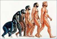 Do you adhere to the theory of evolution or not?